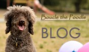 Boucle Blog