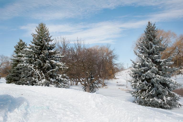 _JAS7667-WEB-Winter-tree-scene