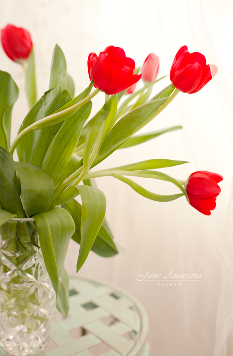_JAS7974-2WEB-Red-Tulips