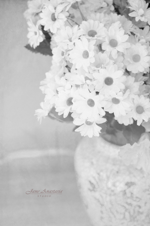 _JAS8364-WEB--BW-Daisies