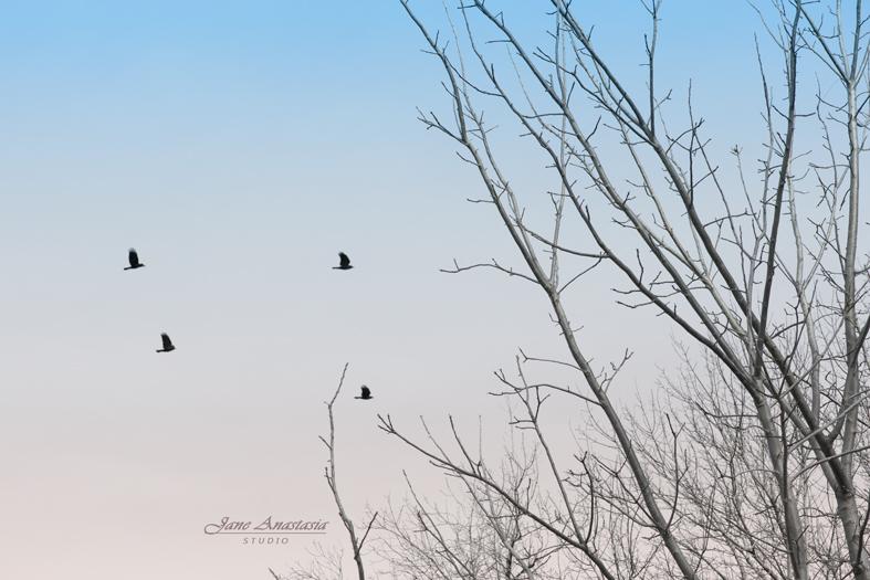 _JAS8496--WEB-Birds-and-Blue-sky
