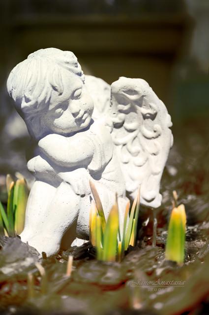 _JAS0532-2WEB-Garden-Angel