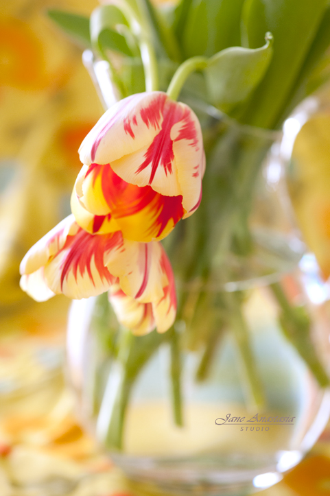 _JAS8731--2-WEb-Two-Tulips