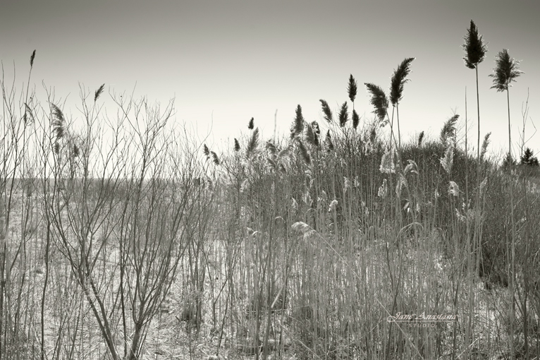 _JAS0566-WEB-Lake-Grasses---BW