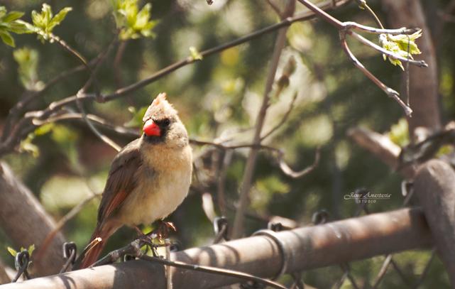 _JAS2291-2WEB-Mrs-Cardinal