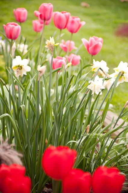 _JAS2525-WEB-Spring-Garden-flowers