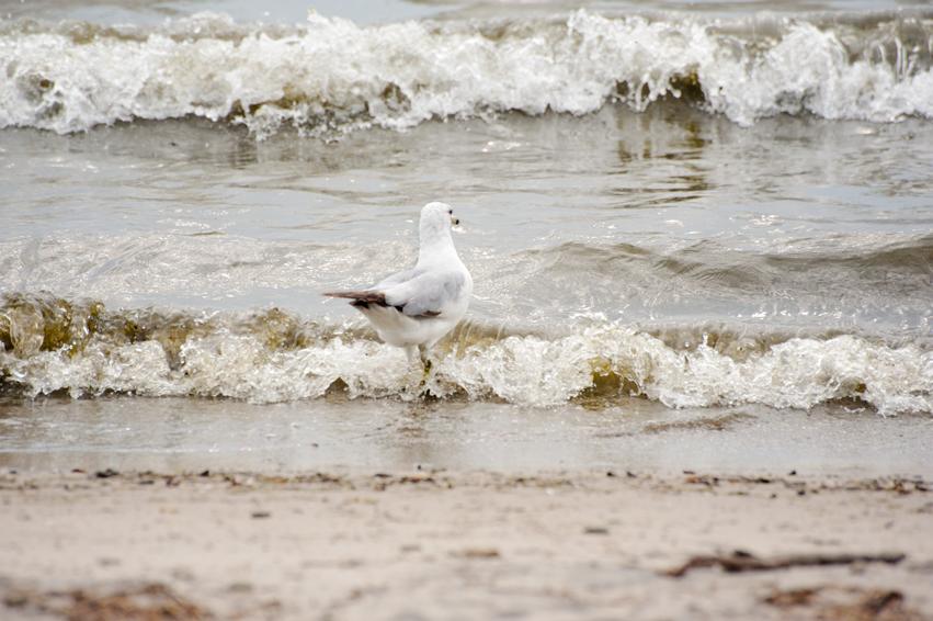 _JAS3085--WEB-Seagull-deciding