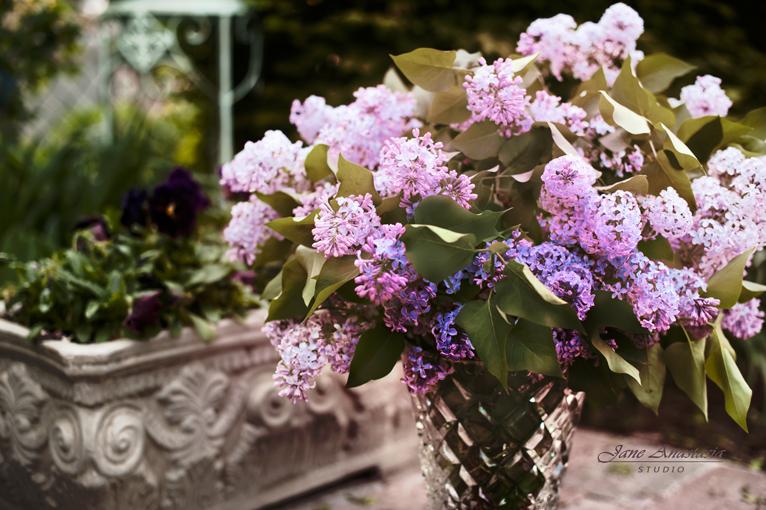 _JAS3386--4a-WEb-Lilacs-Bouquet
