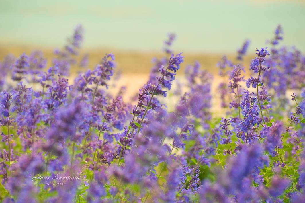 _JAS4083-WEB-Purple-flowers