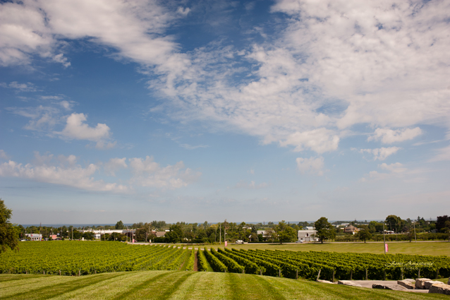 _JAS7477-WEB-Vineyard-view-to-lake
