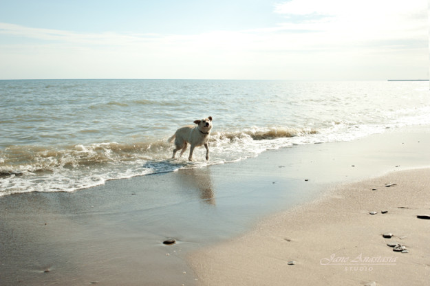 Dog on Beach Lake Ontario Photography
