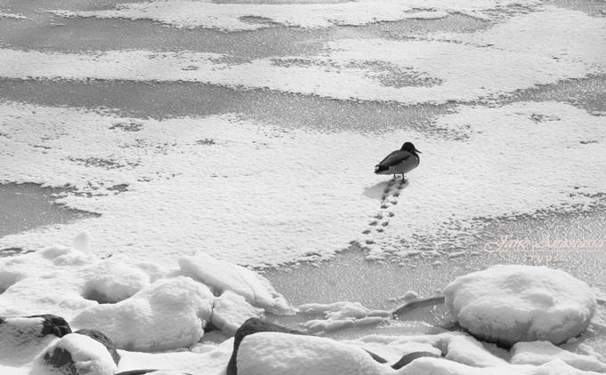 _JAS0801-WEB-Duck-Trails