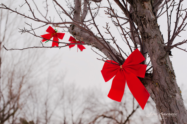 _JAS1116-WEB-Red-Ribbon-in-tree-2