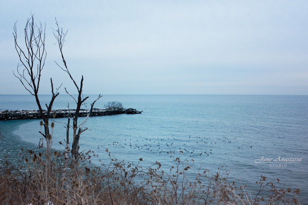 _JAS1211-WEB-Bare-Tree-and-Geese-Lake-Ontario