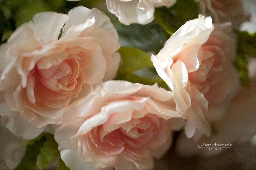 _JAS2874-WEB-Peony-Roses