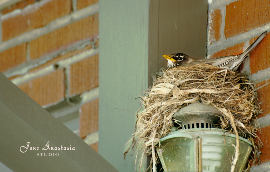 _JAS4419-WEB-Bird-Nesting-on-Julie's-Lantern