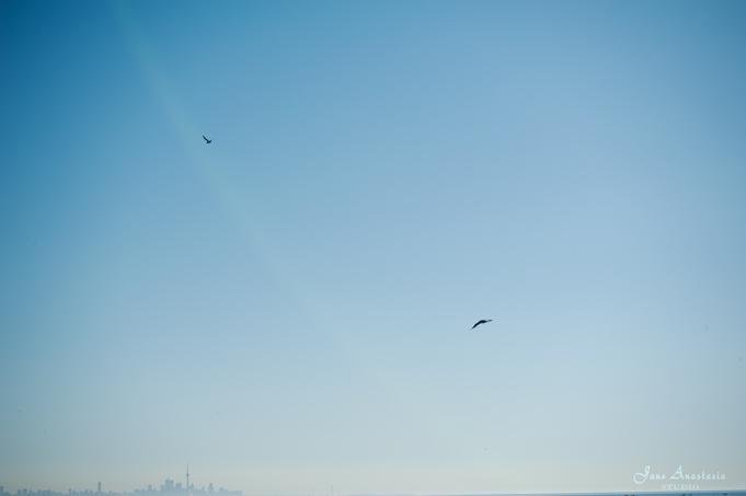 _JAS5283--WEB-Bird-over-Toronto-skylinie
