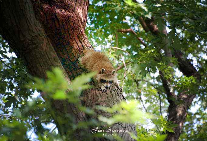 ...sliding down the tree to meet his brother......
