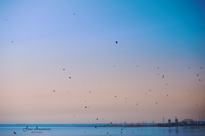 _JAS6973-WEB-Birds-from-Pier