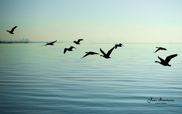_JAS7726-WEB-Flock-of-geese-over-skyline