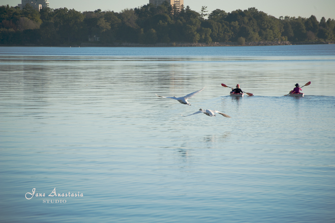 _JAS8695-WEB-Swans-flying-and-canoe-padders