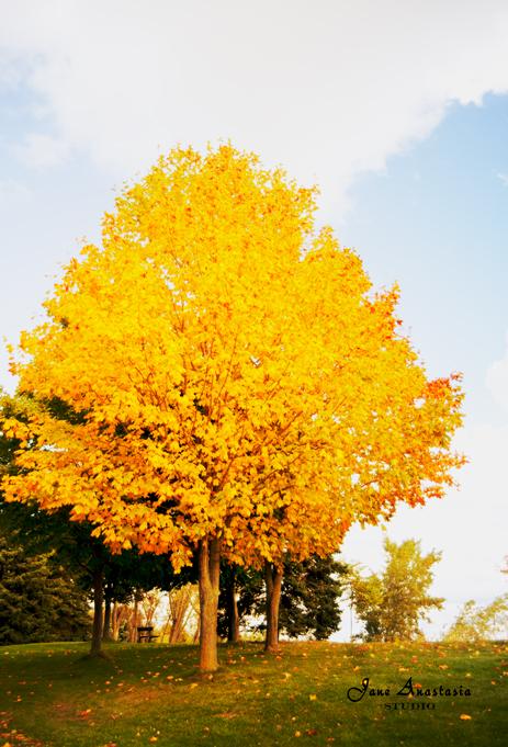 _JAS0265-WEB-Fall-tree-by-lake