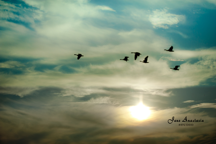 _JAS9747-WEB-Geese-flying-over-lake