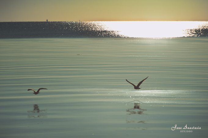 _JAS8600-WEB-Seagulls-at-lake
