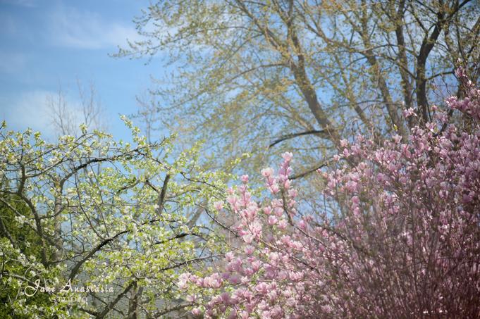 _JAS2871-WEB-Magnolias