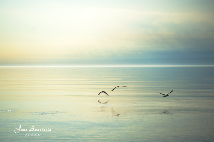 _JAS3161-WEB-Seagulls-at-the-lake