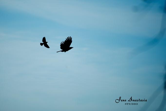_JAS3616-WEB-Bird-silhouette