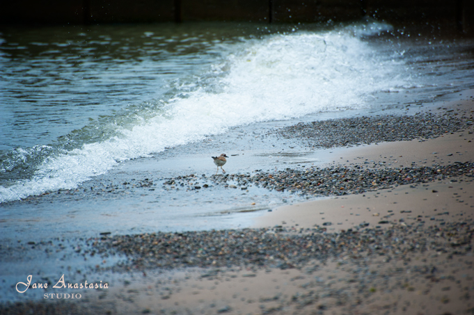 _JAS4373-WEB-Sandpiper-at-the-lake