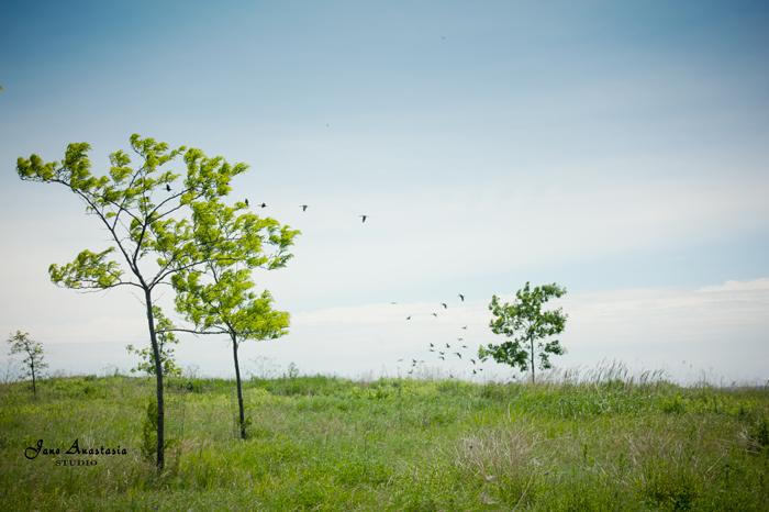 _JAS4753-WEB-Black-cormorants