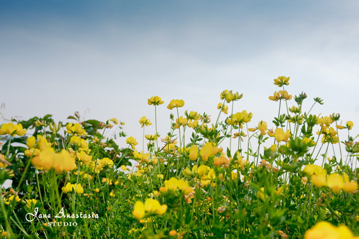 _JAS5384-WEB-Yellow-Flowers-at-the-lake