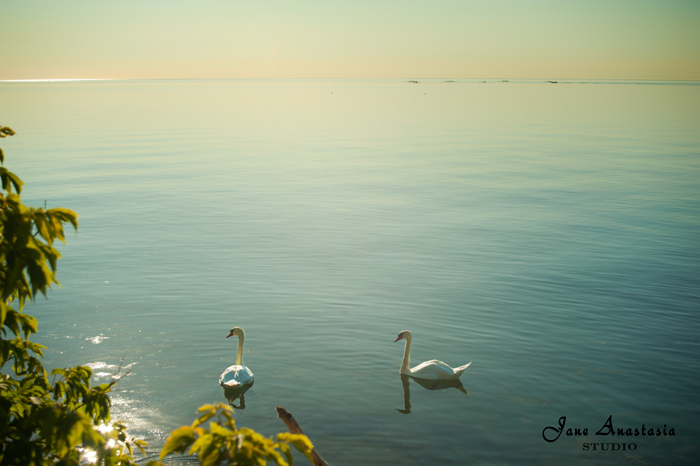 _JAS5844-WEB-Two-swans-on-the-lake