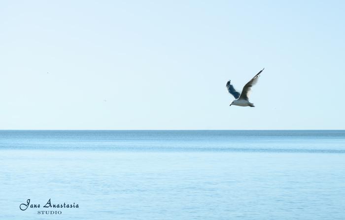 _JAS6231-WEB-Seagull