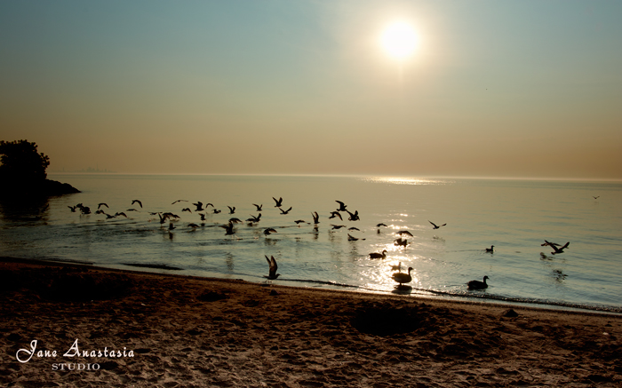 _JAS7505-WEB-Seagulls-at-lake-2