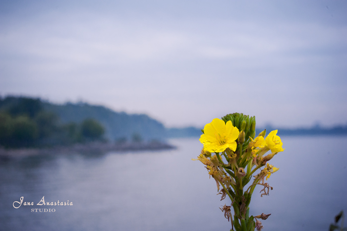 _JAS7764-WEB-Yellow-Flower