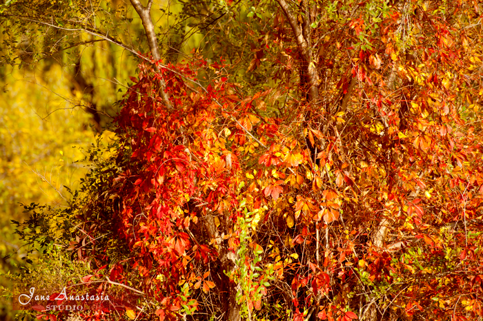 _JAS9091-WEB-Fall-leaves-JAS