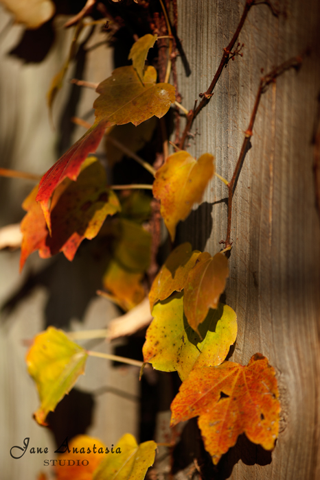 _JAS9287-WEB-Leaf-vine