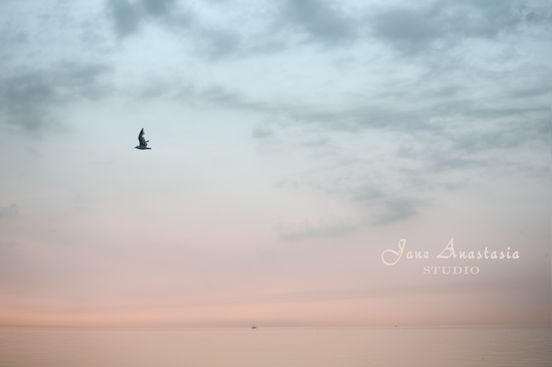 _JAS1602-WEB-Seagull-over-lake--JS
